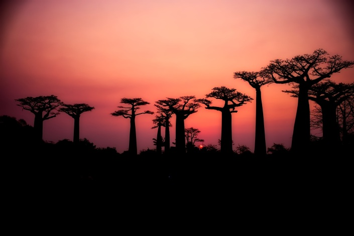 baobabs-2708289-1