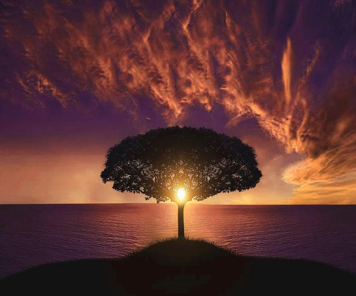 tree-sunset-hassan-altamimi